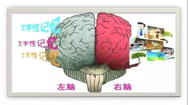 左腦右腦開發
